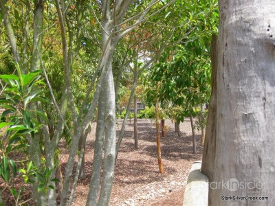 australian-botanical-gardens-31