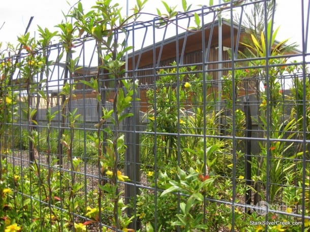 australian-botanical-gardens-32