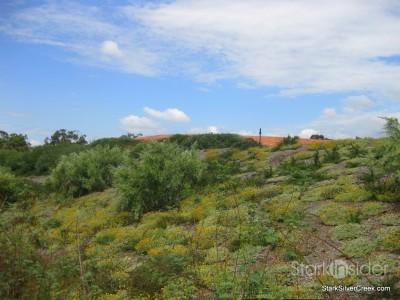 australian-botanical-gardens-43