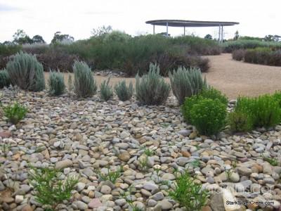 australian-botanical-gardens-45