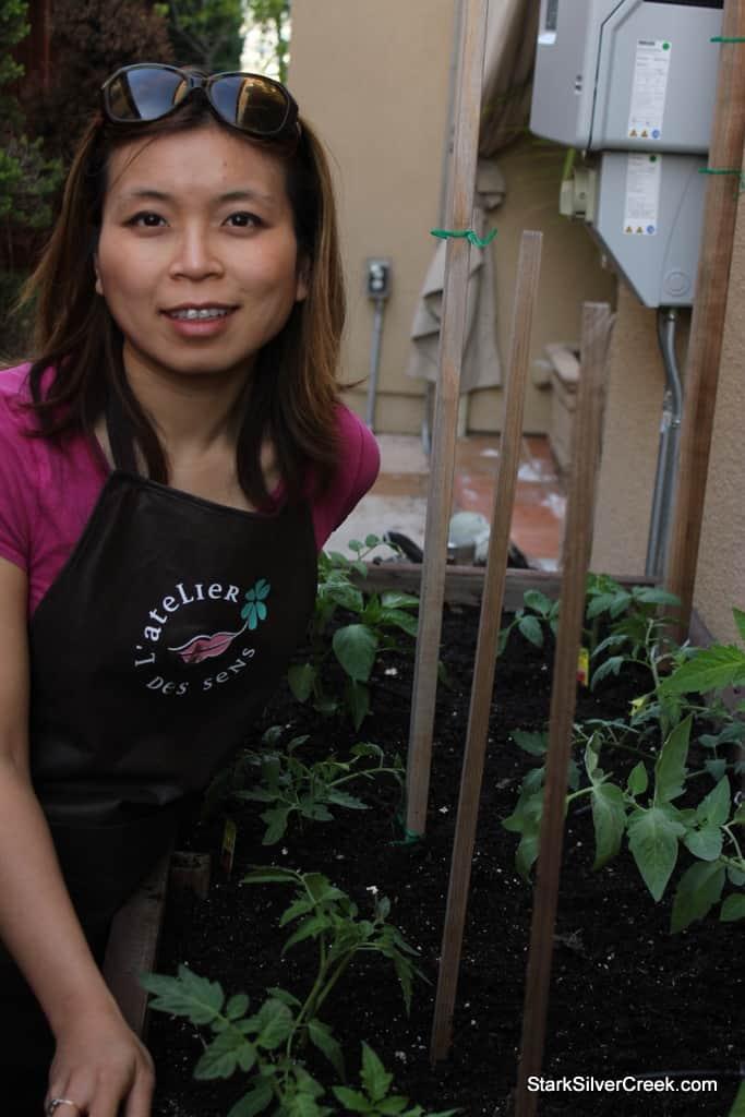 Vegetable Planter Tomato Growing