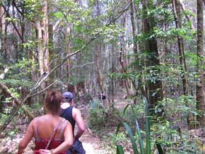spring-brook-national-park-australia-11