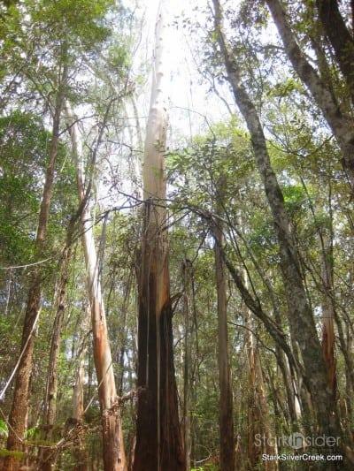 spring-brook-national-park-australia-12