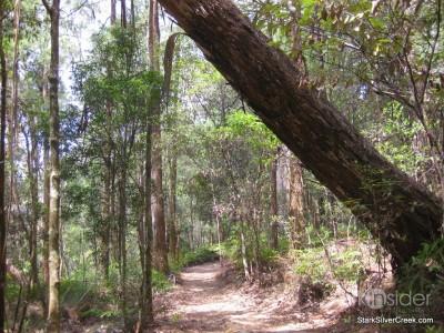 spring-brook-national-park-australia-13