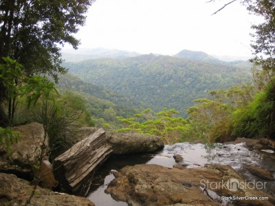 spring-brook-national-park-australia-17