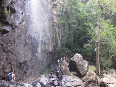 spring-brook-national-park-australia-20