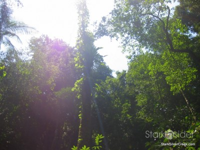 spring-brook-national-park-australia-5