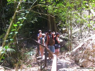spring-brook-national-park-australia-7