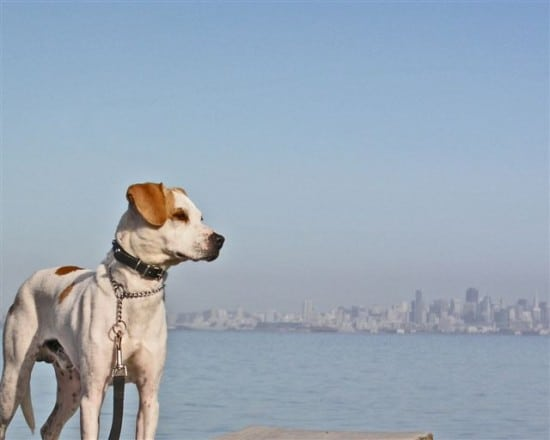 Senor Cortez can hardly wait to investigate San Francisco.  Maybe he will take the ferry.