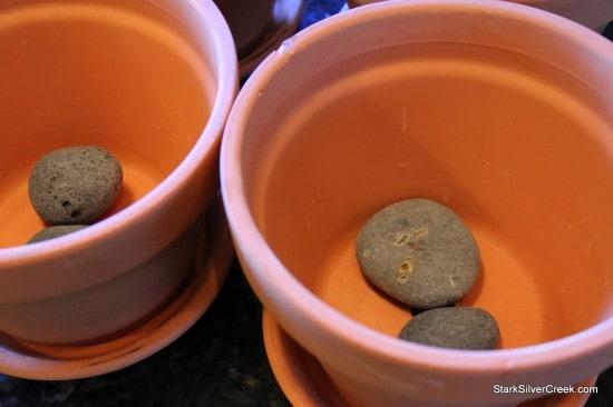 Herb Window Sill Garden Pots