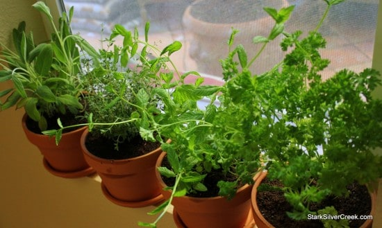 Testing out the window sill area for the herbs. Figuring out the best design for the window sill garden construction.