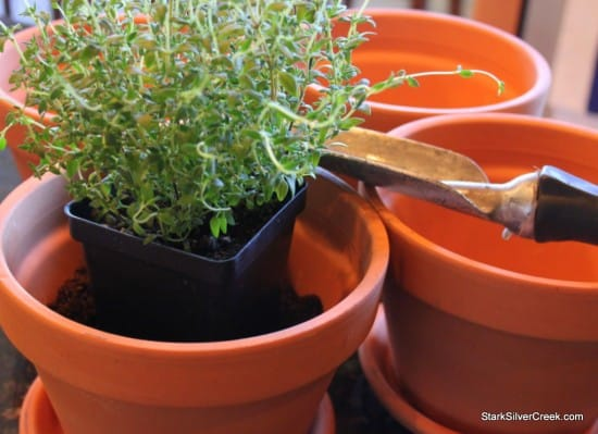 Herb Window Sill Garden Pots soil