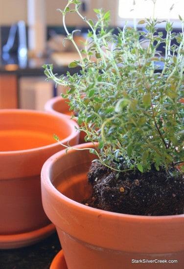 Herb Window Sill Garden Pots soil thyme