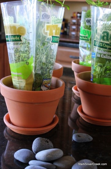 I've placed the herbs in the pot to get an idea of spacing.