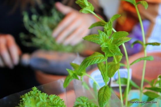 Herb Window Sill Garden Pots soil thyme potting