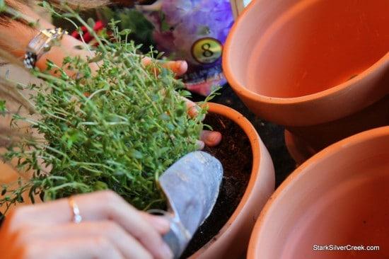 Herb Window Sill Garden Pots soil thyme potting plant trowel