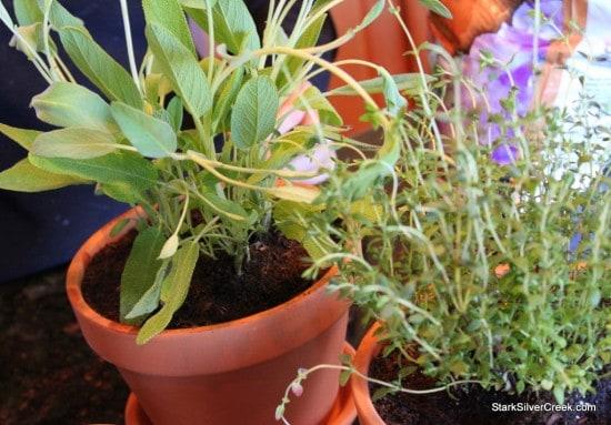 Herb Window Sill Garden