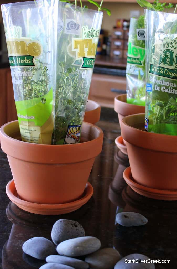 gardening project planting herbs   window sill garden