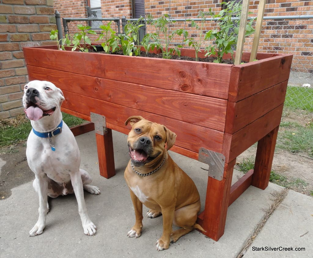 Breannau0027s Two Dogs Pose In Front Of The Newly Constructed Vegetable Planter  Box.