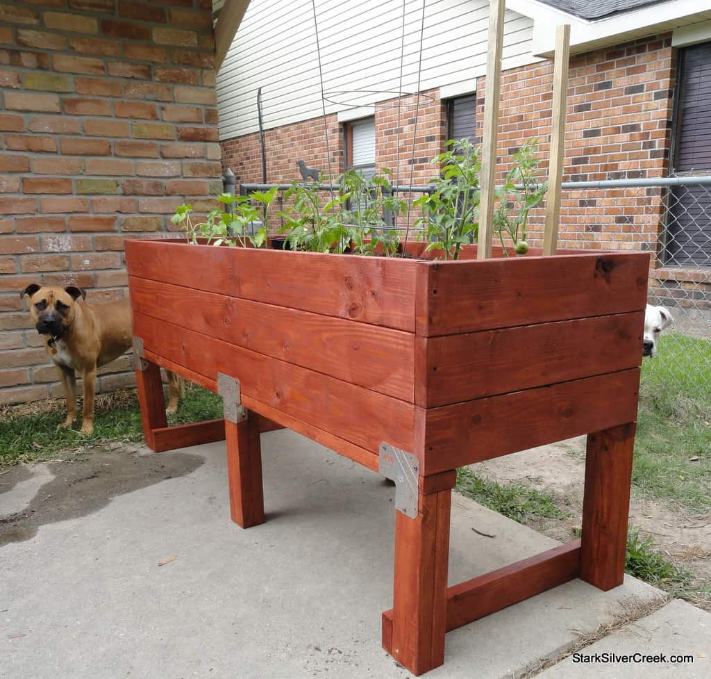 Build a doggie proof vegetable planter box stark insider for Vegetable garden planter box designs