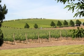 Walla Walla Wine Country