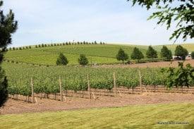 Walla Walla Wine Country