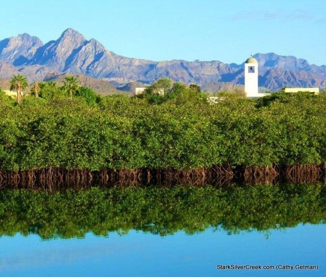 Mangroves Loreto