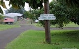 Coffee-Kona-Hawaii-Greenwell-Farms-5