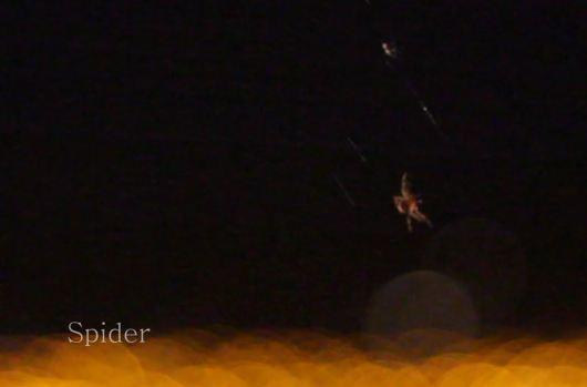 Spider San Jose (Canon T2i)