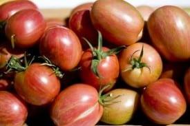 Taste Tomato