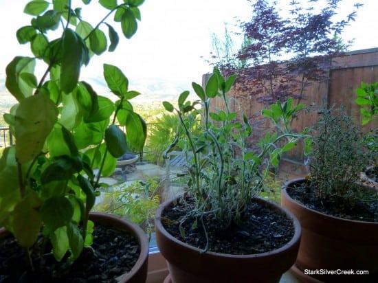 Herb Window Garden