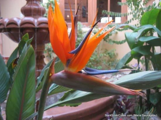 Loreto Calendar 2011 Submissions
