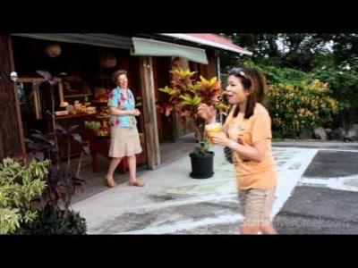 Video thumbnail for youtube video Mango Madness Hawaii! | Stark Insider