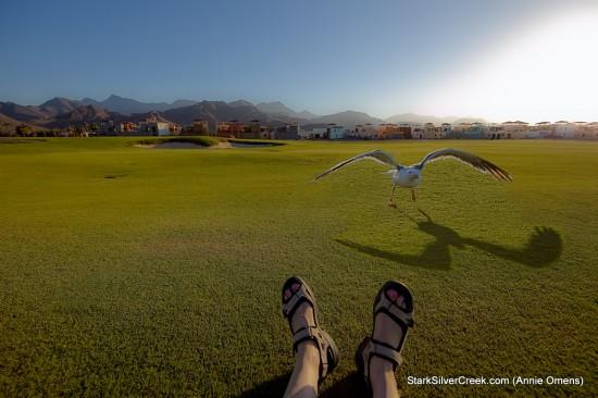 Feet with Bird