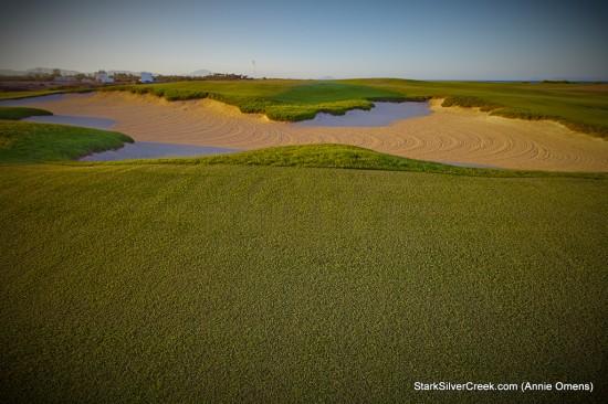 Gulf Grass