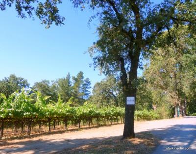 Iron-Horse-Vineyards-10