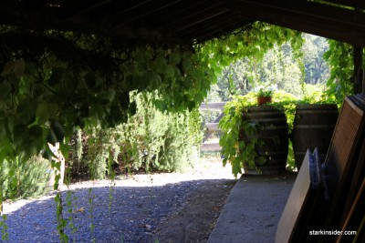 Iron-Horse-Vineyards-36