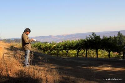 Mount Veeder Vineyard