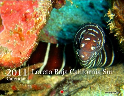 2011 Loreto Calendar. This incredible underwater photo was taken by Kristin Hawkins. I thought it was appropriate to be the cover since this year's net proceeds will go to benefit Eco Alianza.