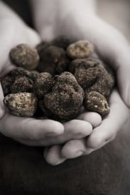White Peidmont and Black Perigord Truffles