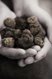 White Peidmont and Black Perigord Truffles