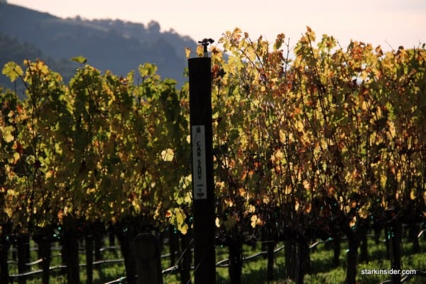 stags-leap-winery-stark-insider-9