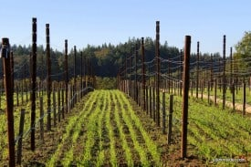 The Russian River Valley AVA was established in 1983