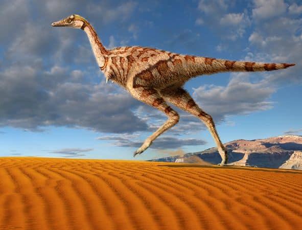 Theropod Dinosaur