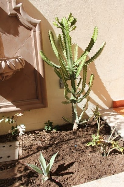 I like this cactus - something we wouldn't see back home.