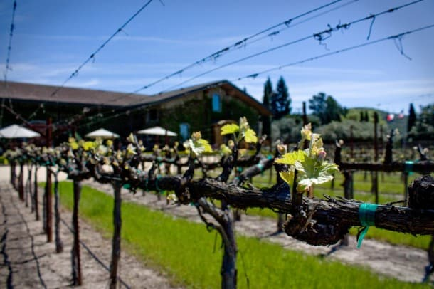 """Clos Du Val (Napa): """"Spring has finally arrived! Bud Break is in full swing here in the Stags Leap District."""""""
