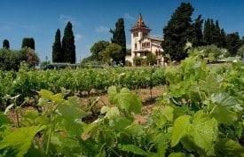 Tempranillo vines in Garraf province, Penedès region