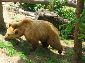 Papa bear at Bear Park