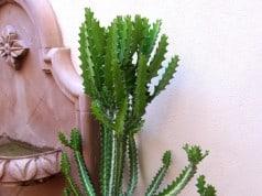 Desert garden cactus
