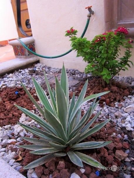 Desert Garden Ideas best 25 arizona landscaping ideas on pinterest The